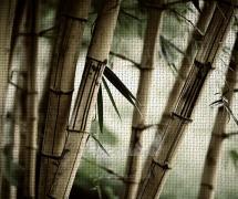 Фотообои с фактурой Натуральный Холст